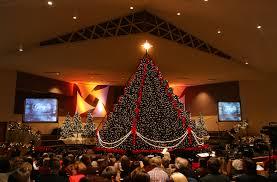 live christmas trees for sale foothills living christmas tree tech sct 2016 live