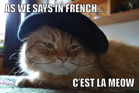 What Is Meme In French - french cat is french meow memez