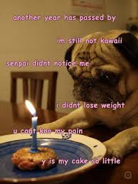 Pug Birthday Meme - another year passed by pug birthday memes and comics
