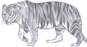 a basic bengal tiger sketch by yellowpeel on deviantart