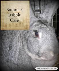 summer rabbit care rabbit backyard and farming