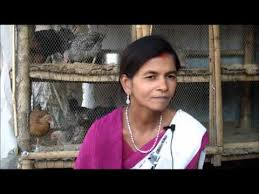 Backyard Poultry In India Poultry Success Story Hindi Gaya Jeevika Bihar Youtube