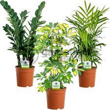 live indoor plants indoor plant mix 3 plants house office live potted pot plant