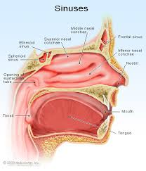 can sinus infection cause dizziness light headed how to get rid of a sinus headache symptoms relief medicine