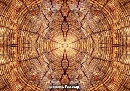 wood tree rings images Realistic tree rings close up background download free vector jpg