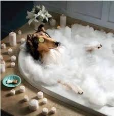 Dogs In The Bathtub 54 Best Dogs Love Bubbles Images On Pinterest Animals Bubbles