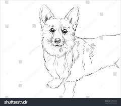 vector portrait welsh corgi pembroke hand stock vector 586599560