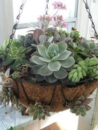 Hanging Succulent Planter by Hanging Pine Cone Succulent Planter Garden Dreams Pinterest
