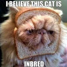 Cat In Bread Meme - bread puns punpedia