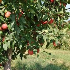 money saving fruit tree assortments from stark bro s