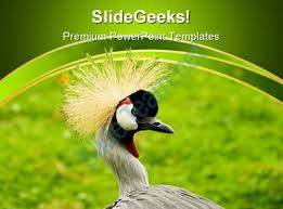 south african crowned crane beauty powerpoint templates and