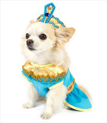 Small Dog Costumes Halloween 190 Disfraces Mascotas Images Costumes
