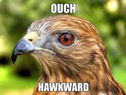 Animal Pun Meme - http www animal space net wp content uploads 2012 07 hawkward meme
