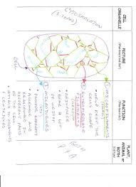 Cell Membrane Worksheet Classwork Assignments Notes Cutouts And Worksheets Prouse U0027s