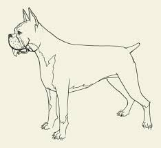 boxer dog jaw how to draw boxer drawing and digital painting tutorials online