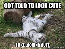Tiger Meme - happy tiger memes quickmeme