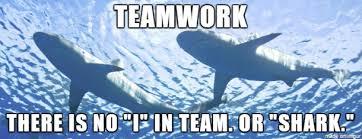 Teamwork Memes - shark teamwork meme on imgur