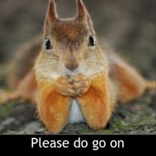 Go On Meme - 36 most funniest squirrel meme photos that will make you laugh