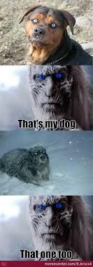White Walker Meme - white walker dog by lt brocoli meme center