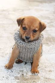best 25 puppy sweaters ideas on pug