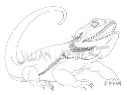 bearded dragon drawing drawing sketch library