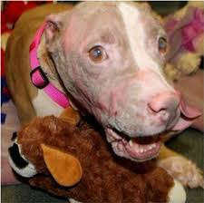 pets news tips u0026 guides glamour rosie dog badly burned with acid recovering but not quite ready