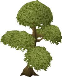 Fruit Trees Runescape - yew tree information the full wiki