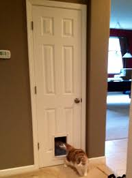Small Closet Door Clever Cat Idea Put A Doggie Door Cat Door On A Small Closet