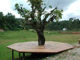 Patio Around Tree 17 Best Tree Decking Images On Pinterest Deck Around Trees