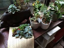 greening your home houseplants can help control indoor air