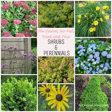 my list of 10 of the easiest care shrubs u0026 plants for your garden