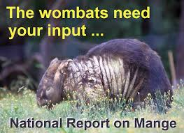 Wombat Memes - mange management treating mange in wombats home facebook