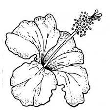 fiori disegni disegni da colorare i fiori mamma e casalinga