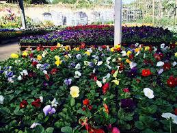 beautiful plants plants u2013 brumley gardens