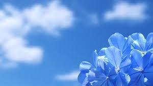 hd images of flowers buy flowers online wallpaper
