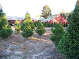 larsen u0027s christmas tree farm