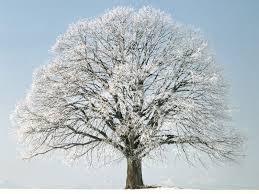 images 712124 winter tree desktop wallpaper 1600x1200