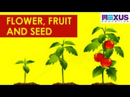 flowers and fruits flower fruit and seed
