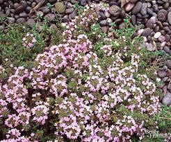 Best Plants For Rock Gardens Best Plants For Rock Gardens Perennials Garden Ideas And Plants