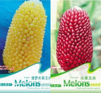 wholesale pineapple seeds buy cheap pineapple seeds from chinese