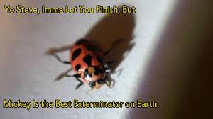 Exterminator Meme - best exterminator on earth homepro pest control extermination
