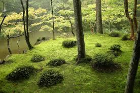 25 best moss for century the 25 most inspiring japanese gardens best choice schools