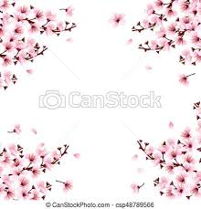 cherry blossom flowers cherry blossom flowers pink cherry blossom flowers clip