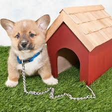 Are Igloo Dog Houses Warm The Complete Guide To Dog House Sizes Paw Castle