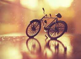 Still Photography Still Photography By Arefin Ashraful