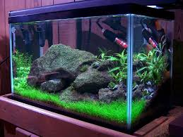 10 gallon planted tank led lighting review top 5 best 10 gallon fish tank by aquarist guide list