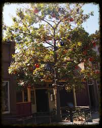 ray bradbury u0027s the halloween tree at disneyland u2014 disneydaze