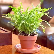 House Plants Diseases - how to clean your houseplants