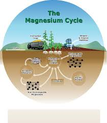 soil and fertilizer magnesium ehsq environment health safety