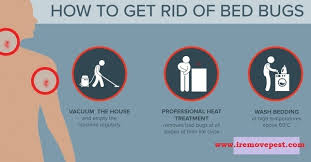 how can you get rid of bed bugs what do you use to kill bed bugs quora